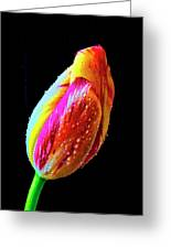 Dew Beaded Tulip Greeting Card