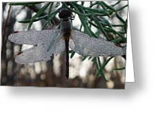 Dew Beaded Wings Greeting Card