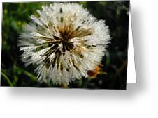 Dew Covered Dandelion Greeting Card