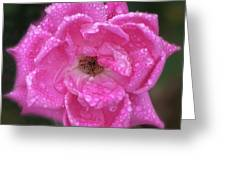 Dew Covered Rose Greeting Card