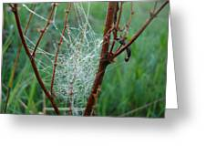 Dew Covered Spider Web Greeting Card
