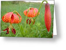 Dew Covered Tiger Lilies Greeting Card