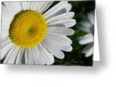 Dew Dazzled Daisy Greeting Card
