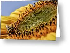 Dew Drop Bee.... Greeting Card