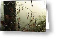 Dew Drop Garland Greeting Card