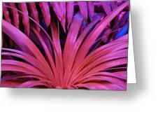 Dew Drop Pink Greeting Card
