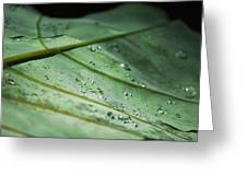 Dew Droplets Of Nature Greeting Card