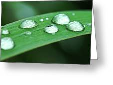 Dew Drops On A Blade Of Grass Greeting Card