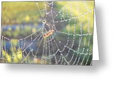 Dew Drops On A Spider Web Greeting Card