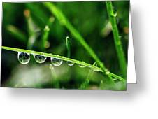 Dew Drops On Blade Of Grass Greeting Card