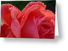 Dew Drops On Rose Greeting Card