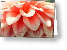 Dew -drops On The Dahlia 2  Greeting Card