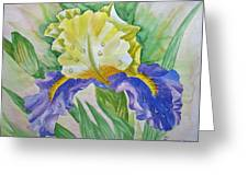 Dew Drops Upon Iris.2007 Greeting Card