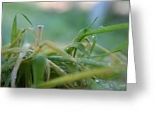 Dew Grass Greeting Card