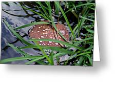 Dew It At The Creek Greeting Card