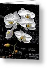 Dew-kissed Cascading Orchids Greeting Card
