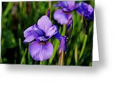Dew Kissed Iris Greeting Card