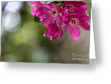 Dew On Blossoms Greeting Card