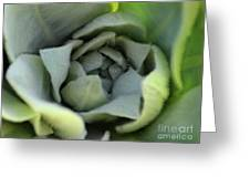 Dew On Common Mullein Greeting Card
