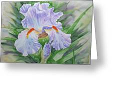 Dew On Light Blue Iris. Greeting Card