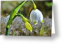 Dew On Lilly Of The Valley Greeting Card