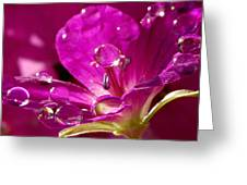 Dew On Pink Greeting Card