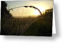 Dew On Spider Web At Sunrise Greeting Card