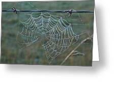 Dew On The Web Greeting Card