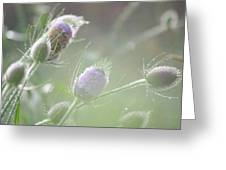 Dew On Thistles 1 Greeting Card
