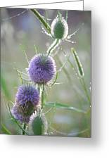Dew On Thistles 2 Greeting Card
