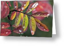 Dew On Wild Rose Leaves In Fall Greeting Card