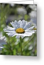 Dewdrop Daisy Greeting Card