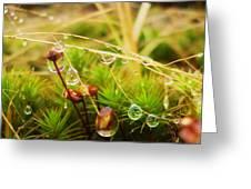 Dewdrop Fairyland Greeting Card