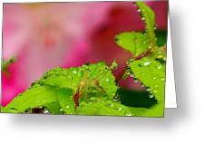 Dewdrops And Pastels Greeting Card