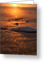 Dewees Island Sunrise Greeting Card