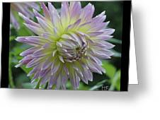 Dewy Dahlia Greeting Card