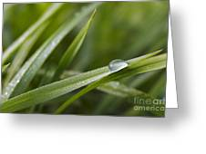 Dewy Drop On The Grass Greeting Card