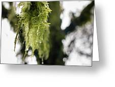 Dewy Moss Greeting Card