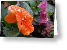 Dewy Pansy 2 - Side View Greeting Card