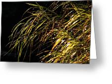 Dewy River Grass Greeting Card