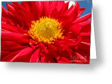 Dhalia Greeting Card