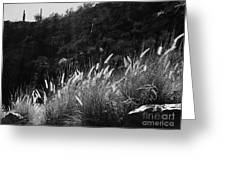 Diagonal Grasses Greeting Card
