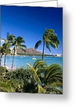 Diamond Head And Palm Trees Greeting Card