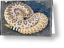 Diamondback Coils Greeting Card