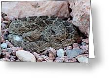 Diamondback Rattlesnake 062414a Greeting Card