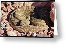 Diamondback Rattlesnake 062414f Greeting Card