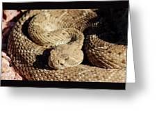 Diamondback Rattlesnake Close-up 062414a Greeting Card