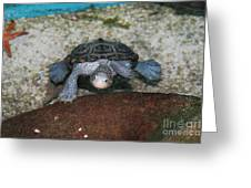Diamondback Terrapin Greeting Card by Lynn Jackson