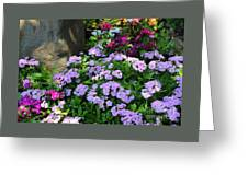 Dianthus Flower Bed Greeting Card