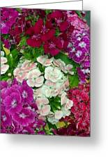 Dianthus Group  Greeting Card